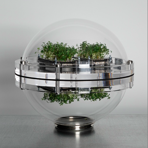 Transparent globe containing small plant