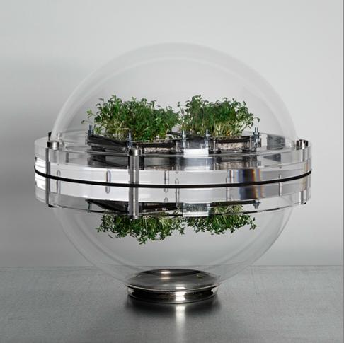 Transparent globe containing small plant