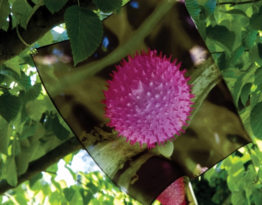 Micrograph of pollen printed on silk, hanging from tree