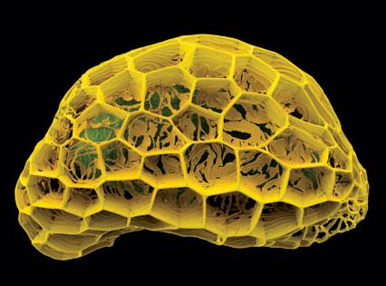 Micrograph of seed